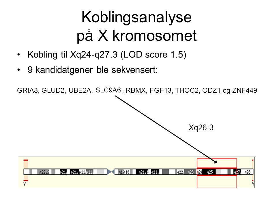 Koblingsanalyse på X kromosomet Kobling til Xq24-q27.3 (LOD score 1.5) 9 kandidatgener ble sekvensert: GRIA3, GLUD2, UBE2A,, RBMX, FGF13, THOC2, ODZ1 og ZNF449 Xq26.3 SLC9A6