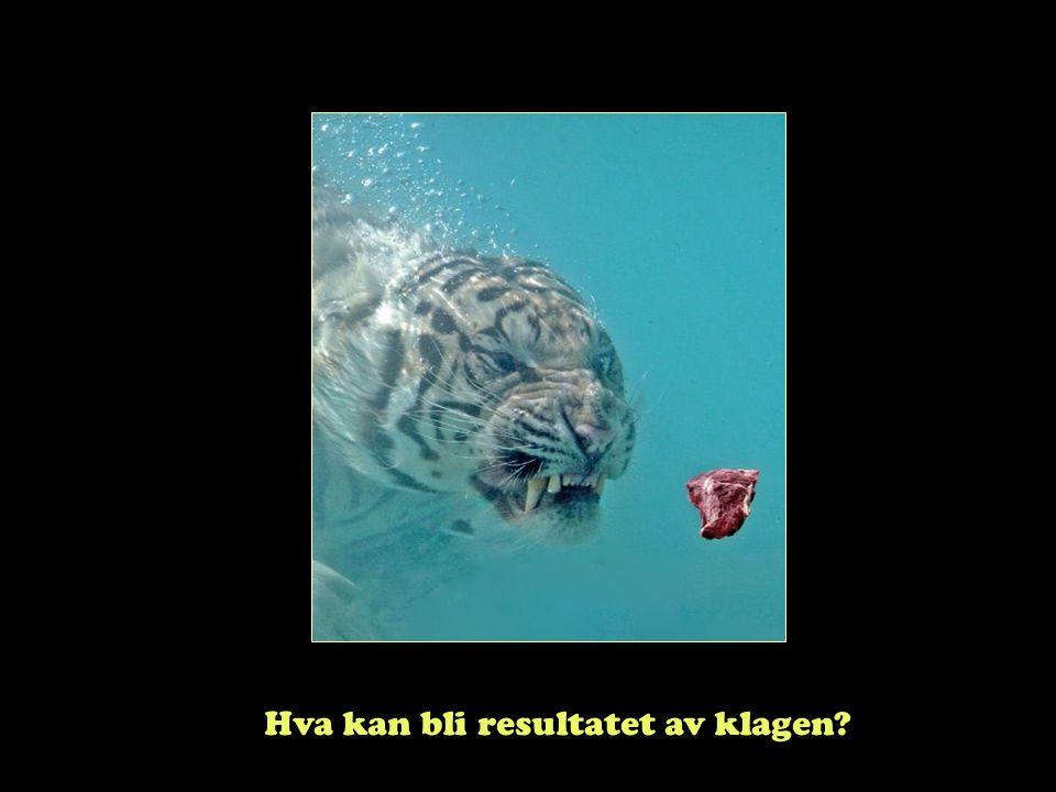 """Steinar Taubøll - UMB Oppreisning etter § 31 for oversittet klagefrist """"Kan"""" behandle klagen Hvis klageren ikke kan lastes Eks: Ikke fått vite om fris"""