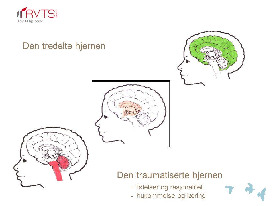 Den traumatiserte hjernen - følelser og rasjonalitet - hukommelse og læring Den tredelte hjernen