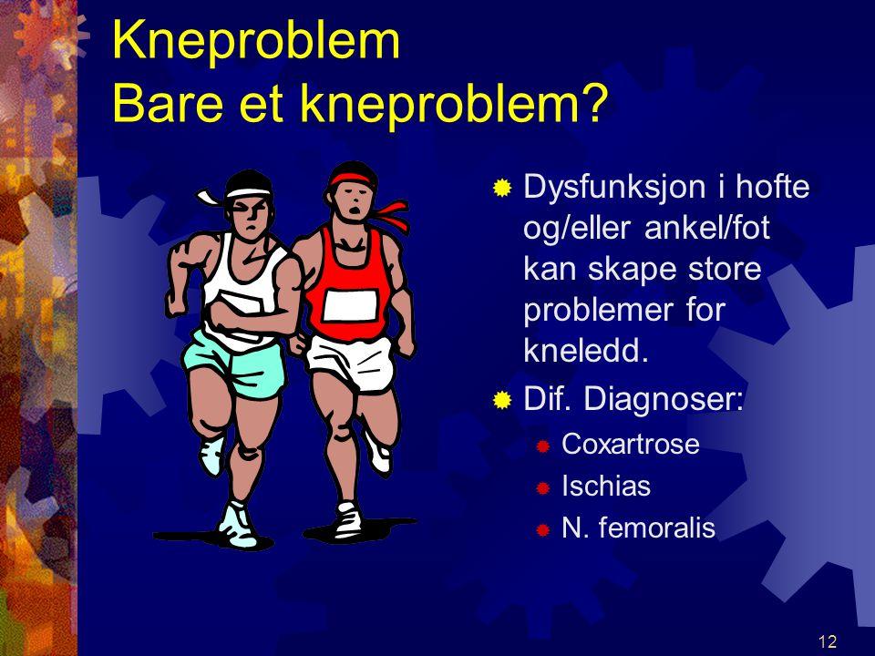11 Muskler, sett forfra: MM.Quadriceps MM. Gracilis MM. Sartorius