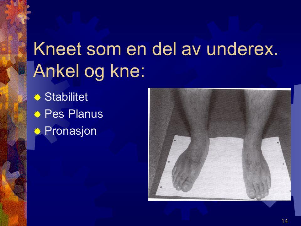 13 Kneet som en del av underex. Hofte og kne SStabilitet MMuskulær styrke AArtrose