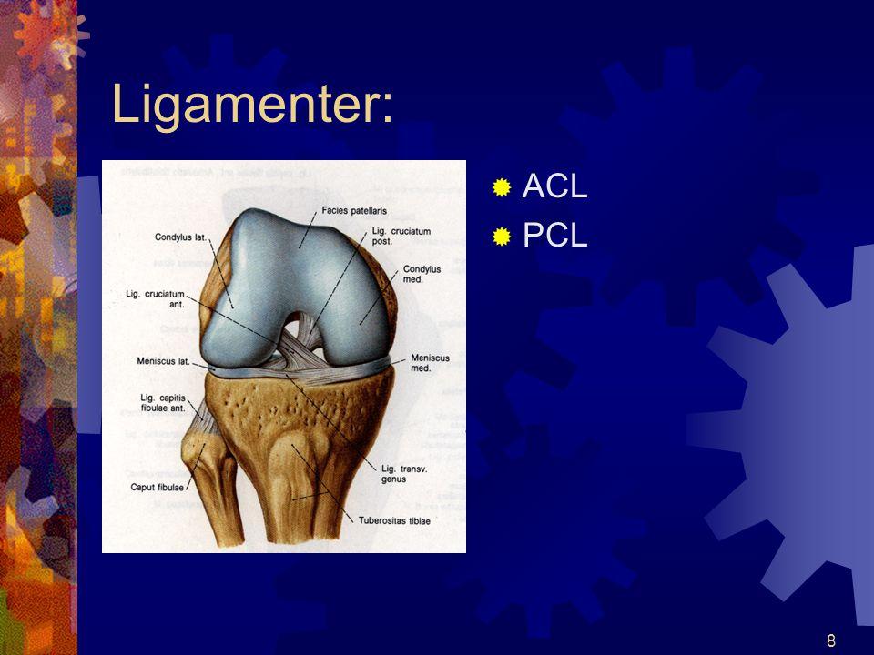 7 Ligamenter MMCL LLCL
