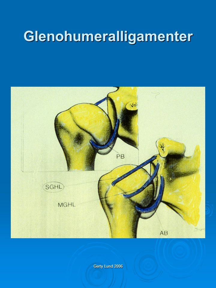 Gerty Lund 2006 Leddstabilitet 1 Fossa glenoidale av en viss størrelse 2 Fossa glenoidales plassering i rommet 3 Humerushodets sentrering i leddet 4 Intakt kapsel og labrum (interartikulært trykk) 5 Funksjonell muskelkontroll av humerushodet (Subscapularis og Infraspinatus)