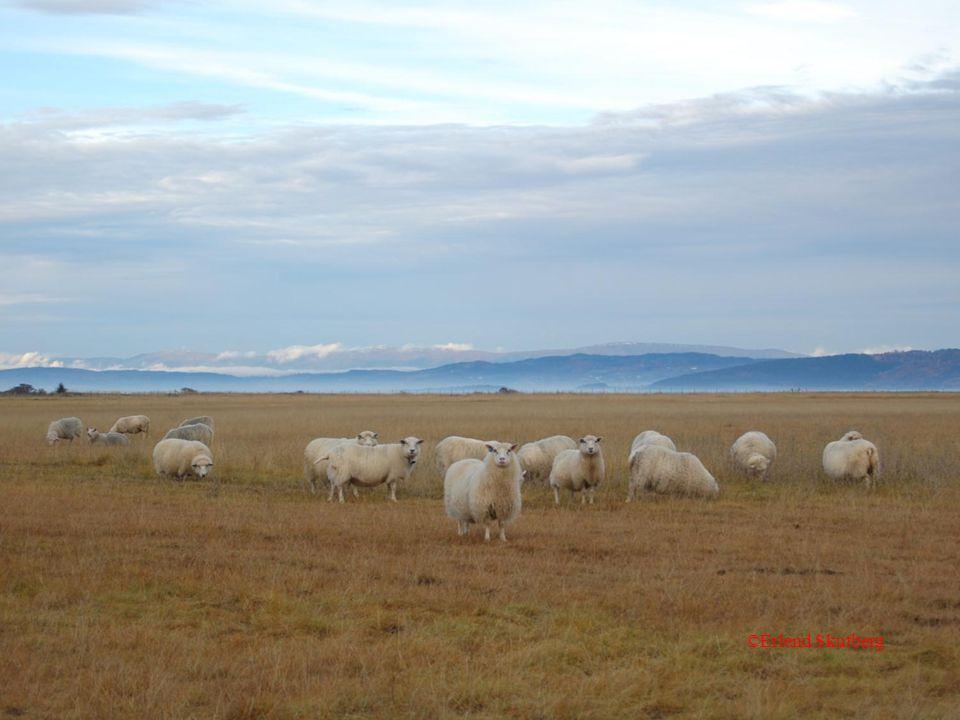 Forvaltning av fjellregionen - Heia 1. november 2012 ©Erlend Skutberg