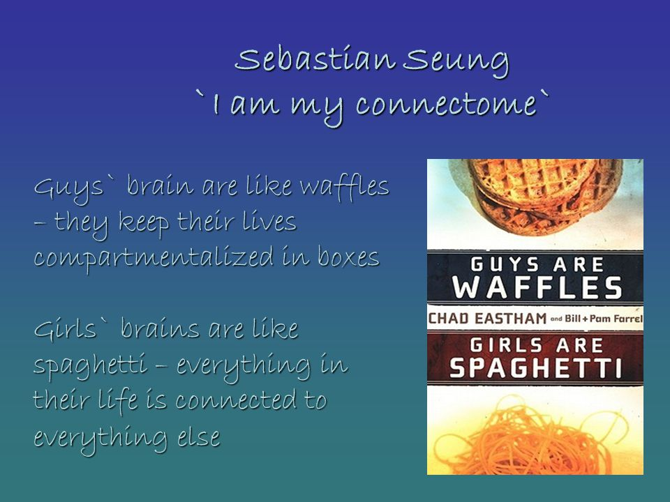 Sebastian Seung `I am my connectome` Guys` brain are like waffles – they keep their lives compartmentalized in boxes Girls` brains are like spaghetti