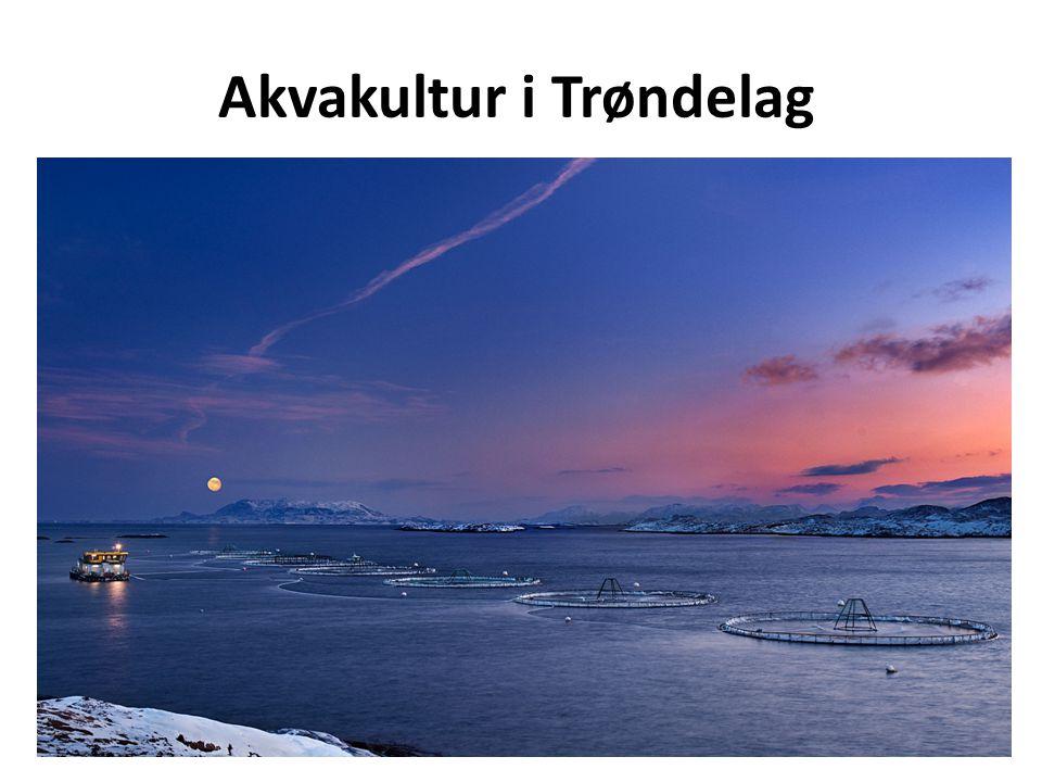 Akvakultur i Trøndelag