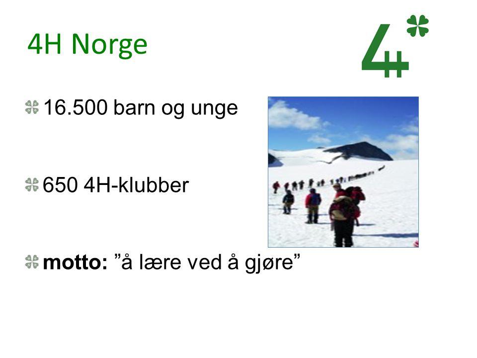 """4H Norge 16.500 barn og unge 650 4H-klubber motto: """"å lære ved å gjøre"""""""