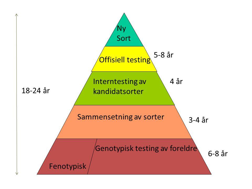 6-8 år 3-4 år 4 år 5-8 år Genotypisk testing av foreldre Sammensetning av sorter Interntesting av kandidatsorter Offisiell testing Ny Sort Fenotypisk 18-24 år