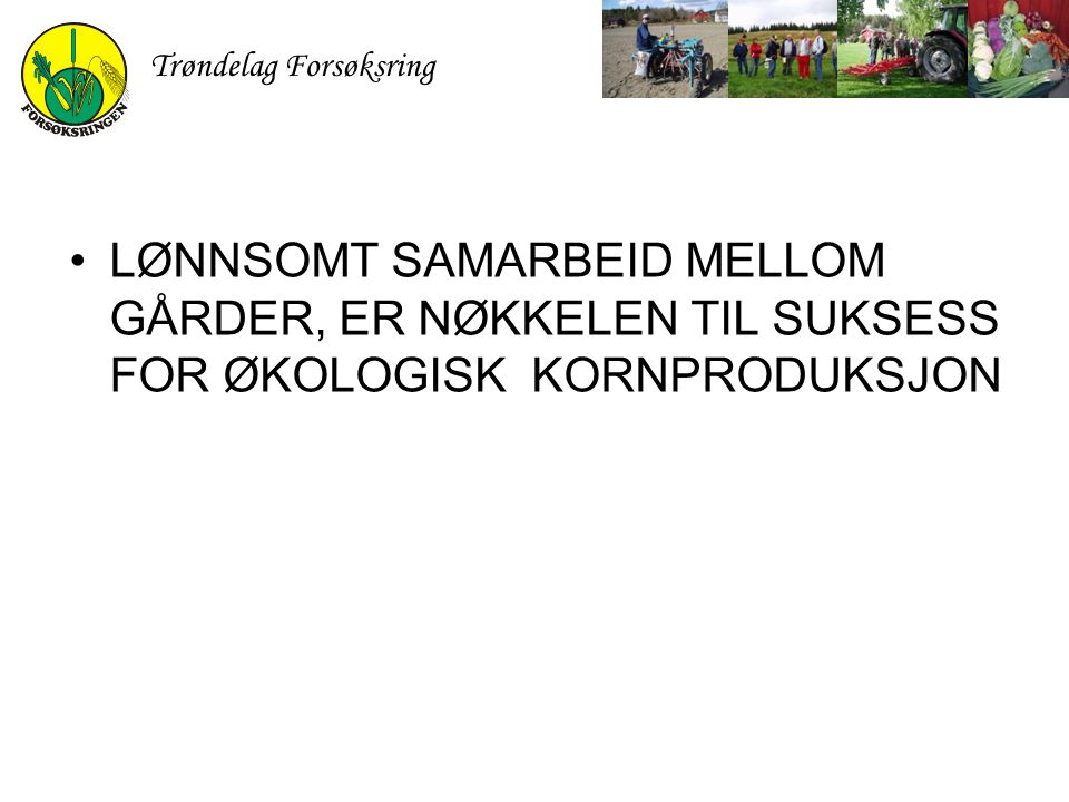Trøndelag Forsøksring LØNNSOMT SAMARBEID MELLOM GÅRDER, ER NØKKELEN TIL SUKSESS FOR ØKOLOGISK KORNPRODUKSJON