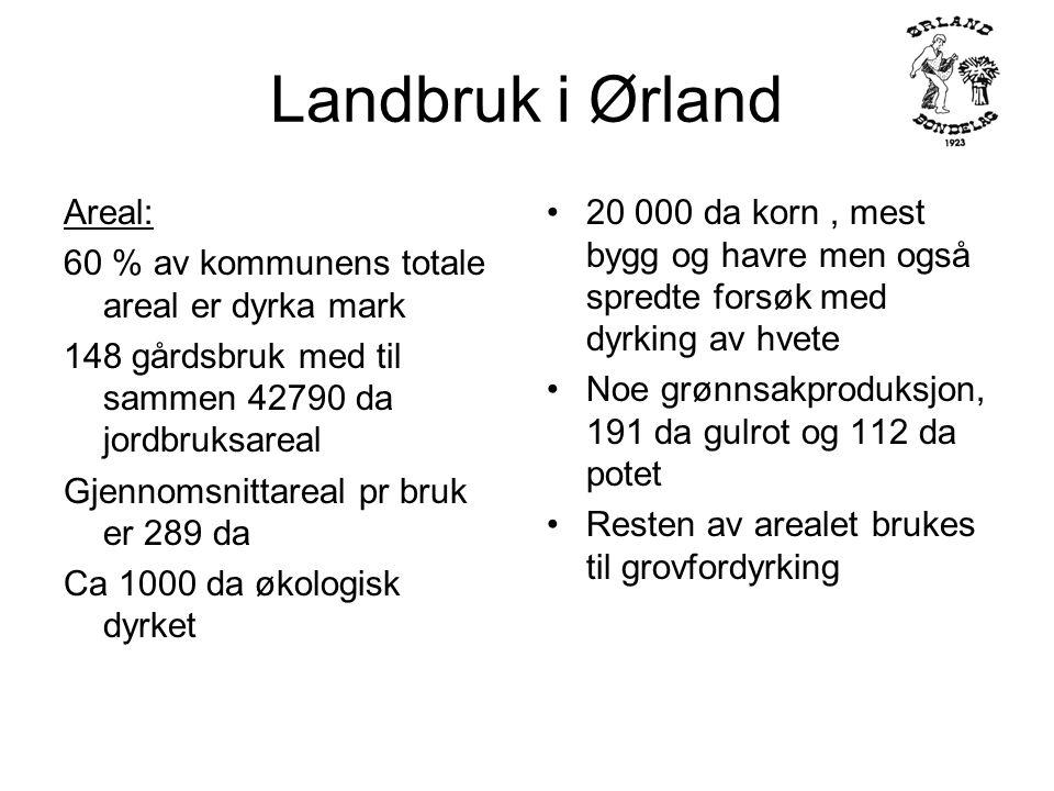 Landbruk i Ørland Produksjon 20000 da korn 1500 melkekyr 4200 storfe 1000 svin 85000 kyllinger 27500 kalkuner 7000 verpehøns 42 hester på gårdsbruk 195 vinterfora sau 10 000 tonn korn 8,2 mill.
