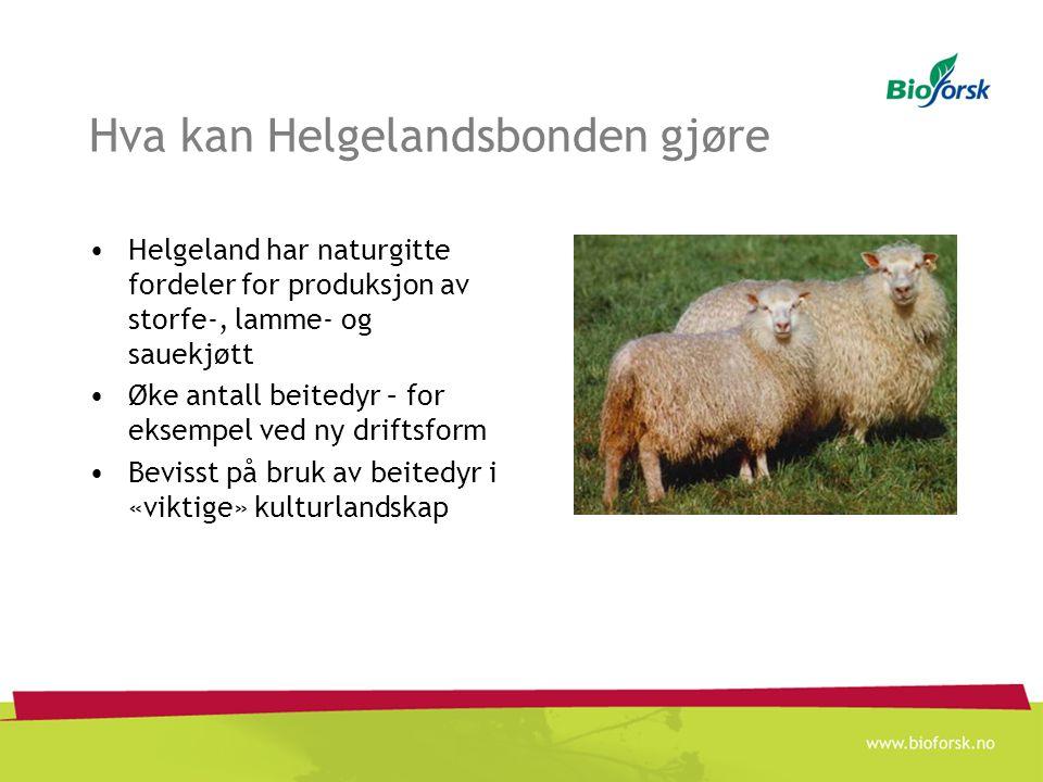 Hva kan Helgelandsbonden gjøre Helgeland har naturgitte fordeler for produksjon av storfe-, lamme- og sauekjøtt Øke antall beitedyr – for eksempel ved