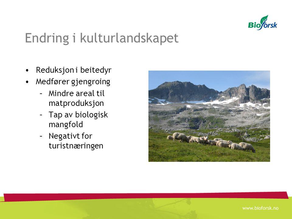 Endring i kulturlandskapet Reduksjon i beitedyr Medfører gjengroing –Mindre areal til matproduksjon –Tap av biologisk mangfold –Negativt for turistnær