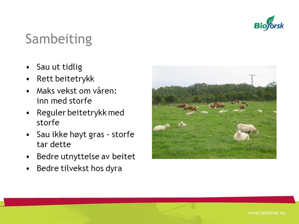 Situasjonen i Nordland Nordland fylke: 576 000 daa (98%) eng (slått og beite) 2 200 jordbruksbedrifter med husdyr (83%) ~ 65 000 storfe ~ 85 000 sau ~ 3 000 geit ~ 1 600 hest