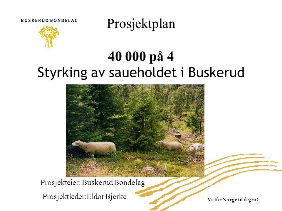 Prosjektets hovedmål Målet med prosjektet er å øke antall søyer fra 35.000 søyer (søknad om produksjonstilsudd 31/07-2007) til 40.0000 i 2012.