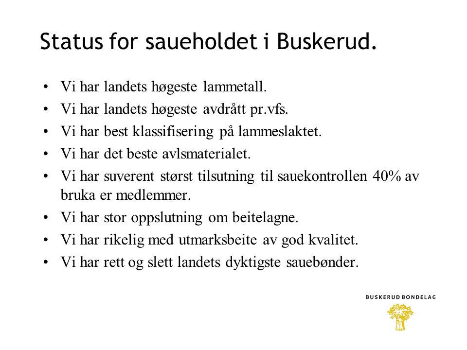 Status for saueholdet i Buskerud. Vi har landets høgeste lammetall.