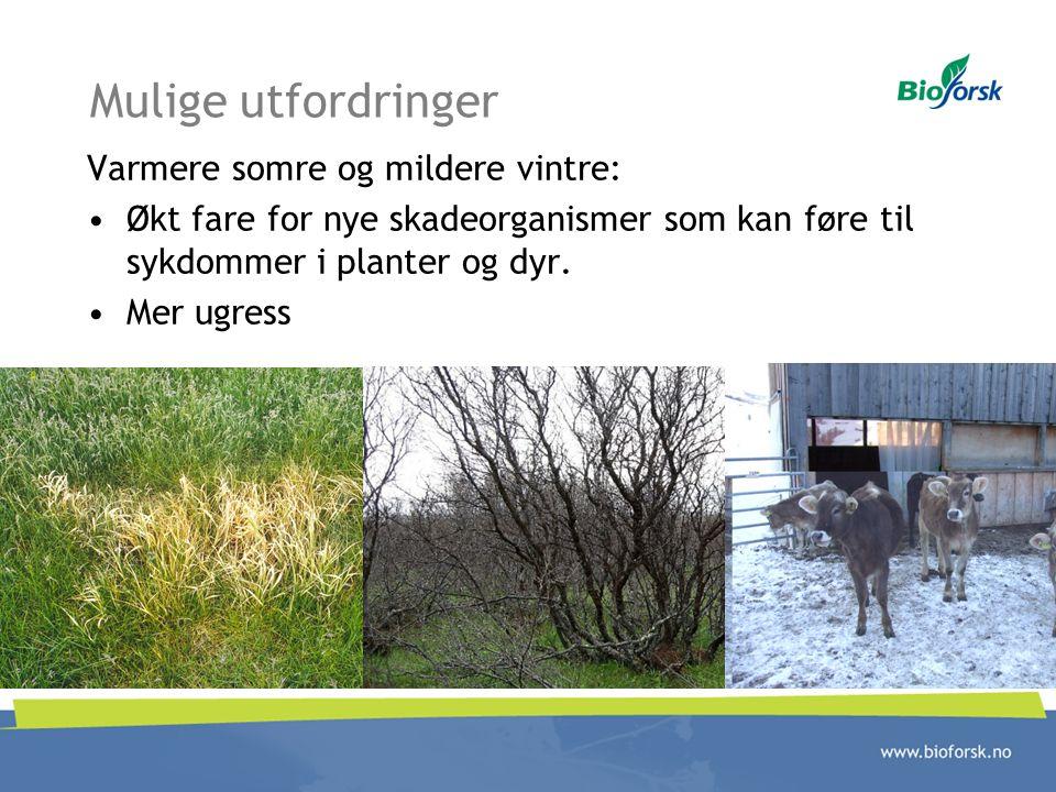 Mulige utfordringer Varmere somre og mildere vintre: Økt fare for nye skadeorganismer som kan føre til sykdommer i planter og dyr. Mer ugress
