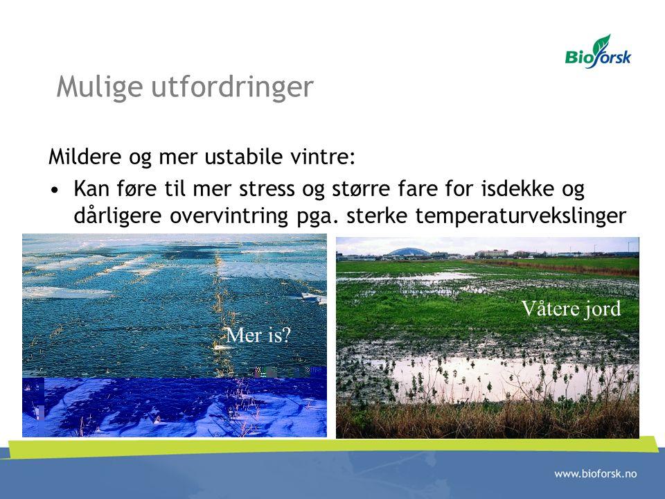 Mulige utfordringer Mildere og mer ustabile vintre: Kan føre til mer stress og større fare for isdekke og dårligere overvintring pga. sterke temperatu