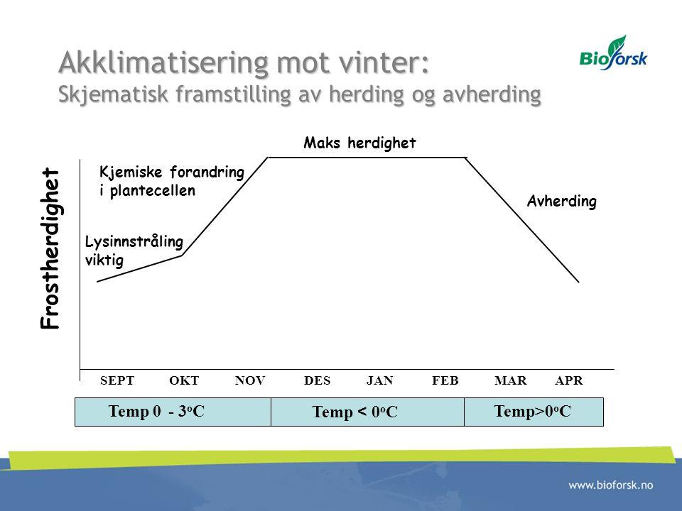 Akklimatisering mot vinter: Skjematisk framstilling av herding og avherding SEPT OKT NOV DES JAN FEB MAR APR Frostherdighet Temp 0 - 3 o C Temp < 0 o