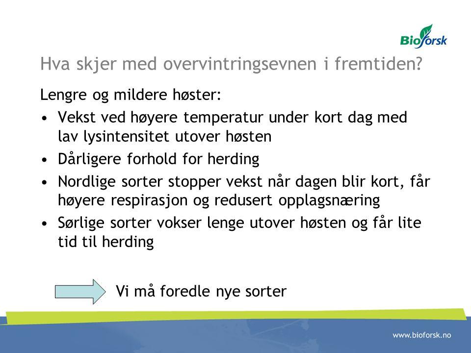 Hva skjer med overvintringsevnen i fremtiden? Lengre og mildere høster: Vekst ved høyere temperatur under kort dag med lav lysintensitet utover høsten