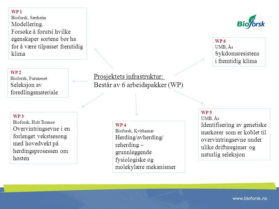 Prosjektets infrastruktur: Består av 6 arbeidspakker (WP) WP 1 Bioforsk, Særheim Modellering. Forsøke å forutsi hvilke egenskaper sortene bør ha for å