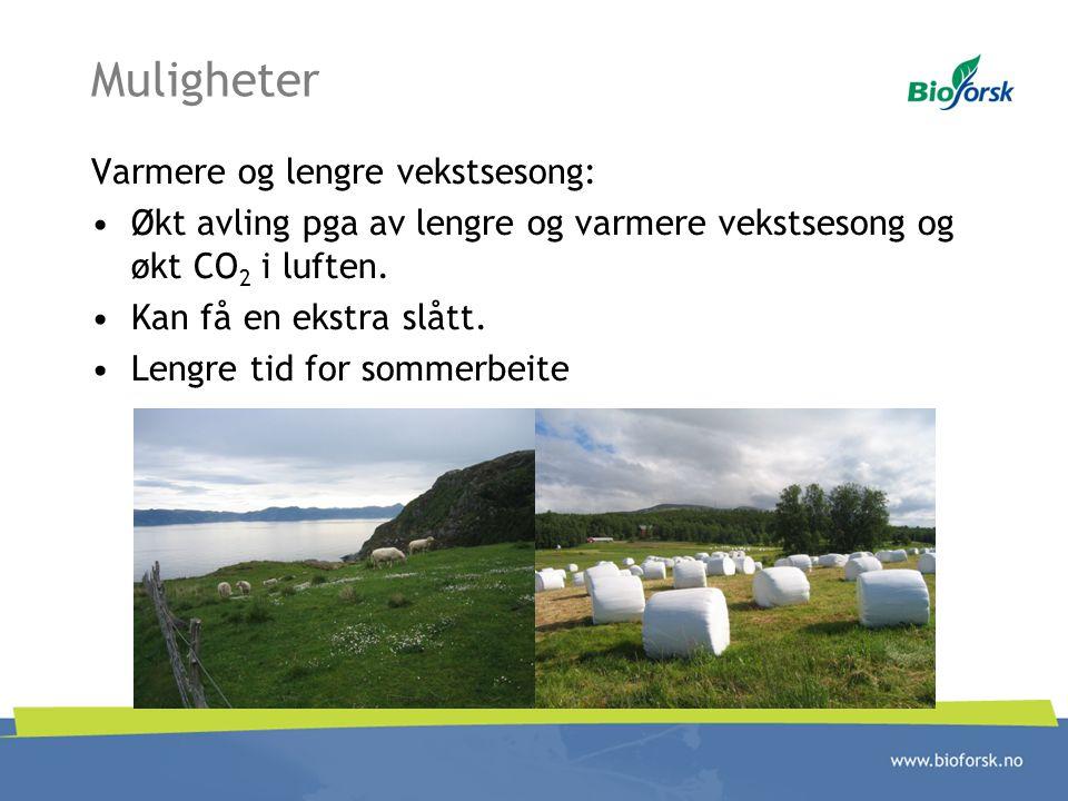 Muligheter Varmere og lengre vekstsesong: Økt avling pga av lengre og varmere vekstsesong og økt CO 2 i luften. Kan få en ekstra slått. Lengre tid for