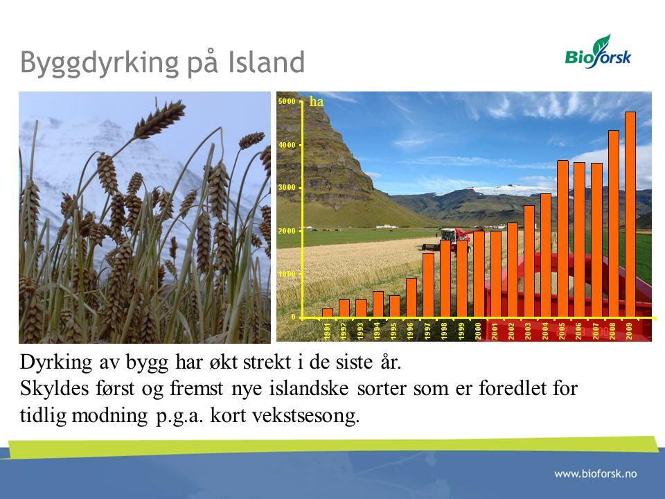 Byggdyrking på Island Dyrking av bygg har økt strekt i de siste år. Skyldes først og fremst nye islandske sorter som er foredlet for tidlig modning p.
