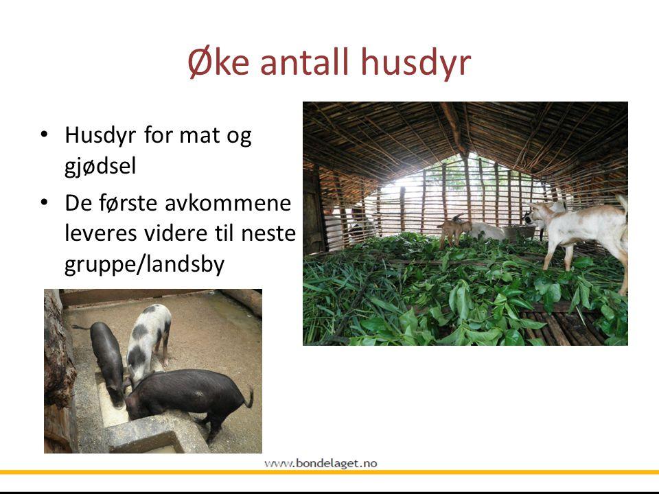 Øke antall husdyr Husdyr for mat og gjødsel De første avkommene leveres videre til neste gruppe/landsby