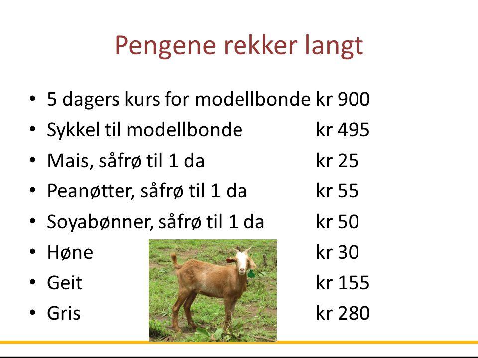 Pengene rekker langt 5 dagers kurs for modellbondekr 900 Sykkel til modellbondekr 495 Mais, såfrø til 1 dakr 25 Peanøtter, såfrø til 1 dakr 55 Soyabøn