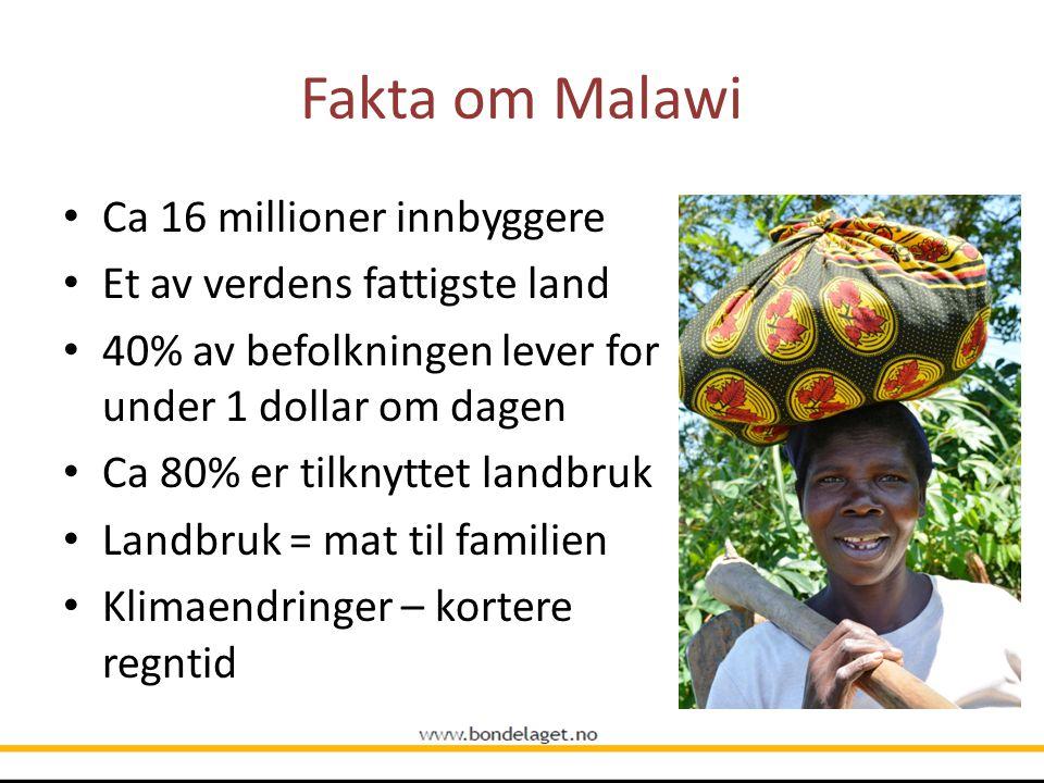 Fakta om Malawi Ca 16 millioner innbyggere Et av verdens fattigste land 40% av befolkningen lever for under 1 dollar om dagen Ca 80% er tilknyttet lan