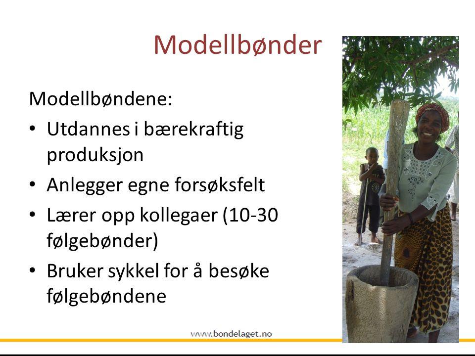 Modellbønder Modellbøndene: Utdannes i bærekraftig produksjon Anlegger egne forsøksfelt Lærer opp kollegaer (10-30 følgebønder) Bruker sykkel for å be