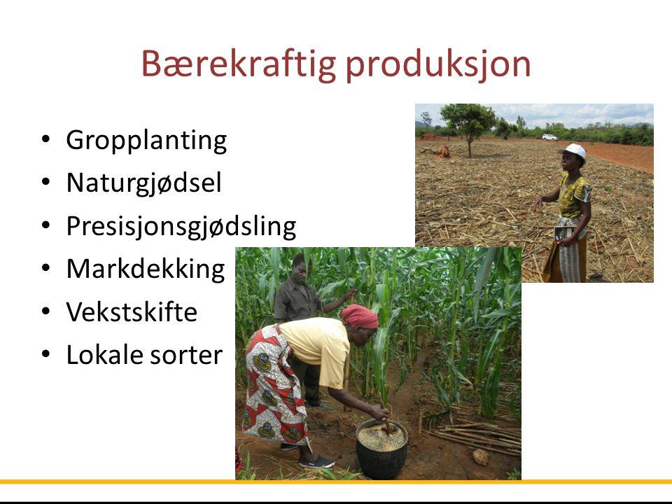 Bærekraftig produksjon Gropplanting Naturgjødsel Presisjonsgjødsling Markdekking Vekstskifte Lokale sorter