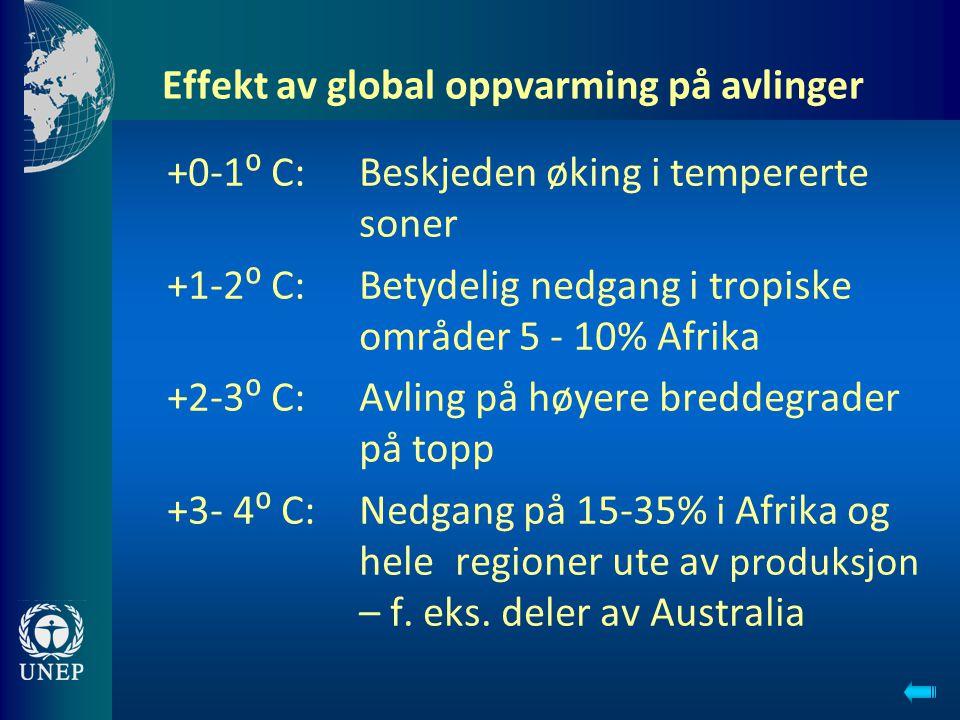 Effekt av global oppvarming på avlinger +0-1⁰ C: Beskjeden øking i tempererte soner +1-2⁰ C: Betydelig nedgang i tropiske områder 5 - 10% Afrika +2-3⁰