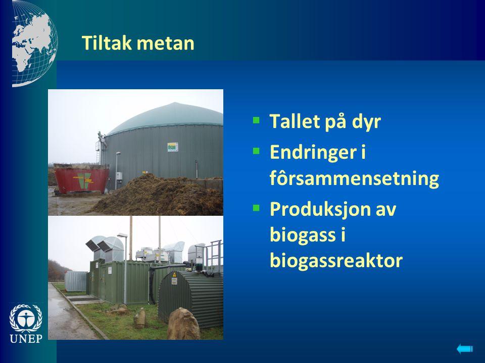 Tiltak metan  Tallet på dyr  Endringer i fôrsammensetning  Produksjon av biogass i biogassreaktor