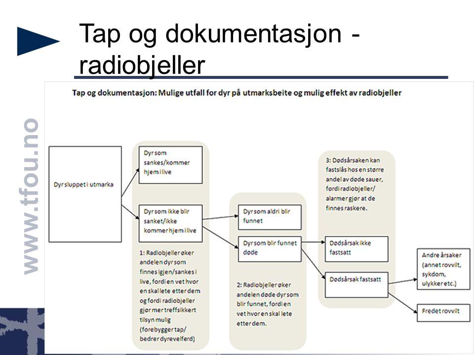www.tfou.no Direkte effekt: Radiobjelle på sau A Sau A: -Gjenfinnes -Berges -Dokumenteres