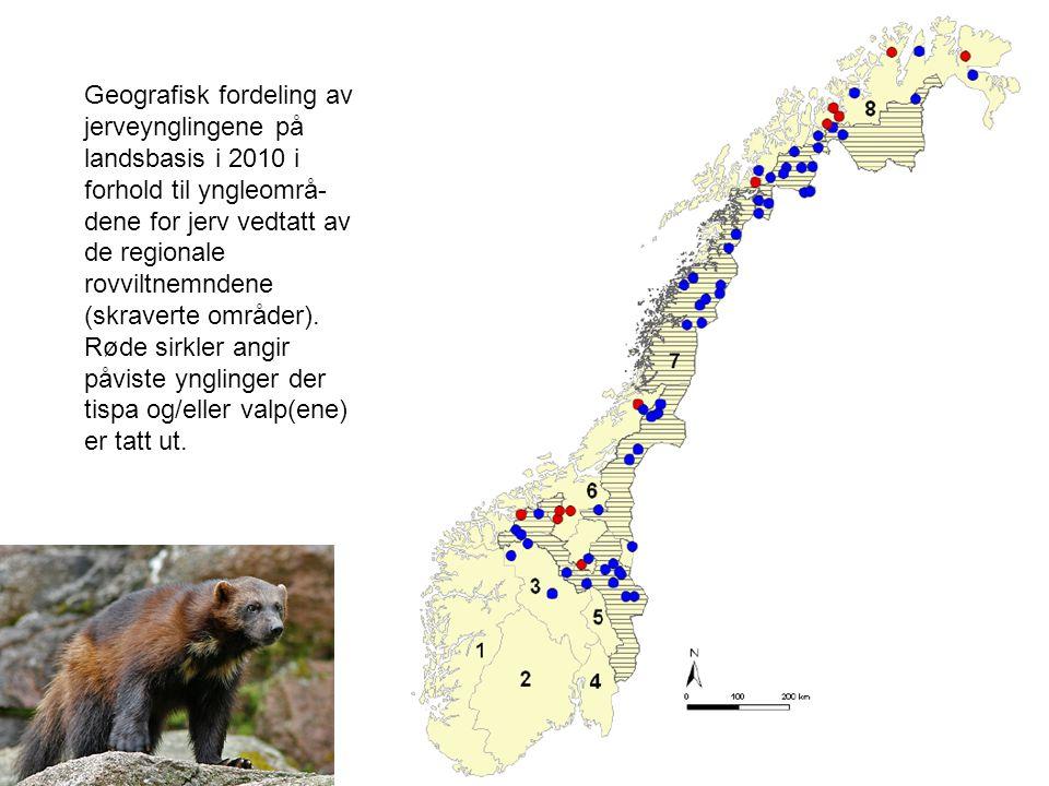 Geografisk fordeling av jerveynglingene på landsbasis i 2010 i forhold til yngleområ- dene for jerv vedtatt av de regionale rovviltnemndene (skraverte områder).