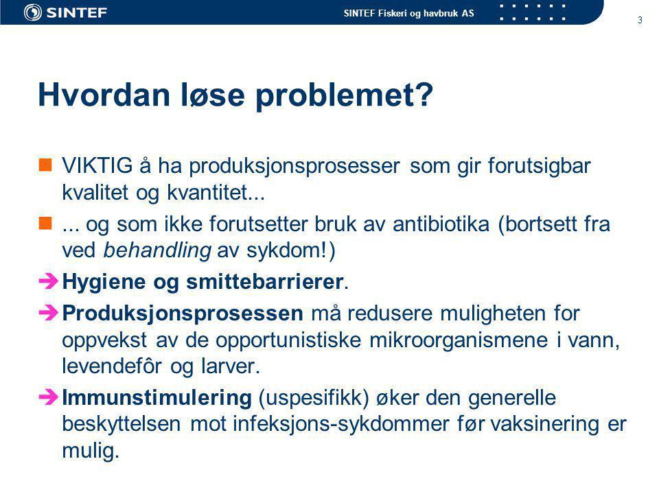 SINTEF Fiskeri og havbruk AS 3 Hvordan løse problemet? VIKTIG å ha produksjonsprosesser som gir forutsigbar kvalitet og kvantitet...... og som ikke fo