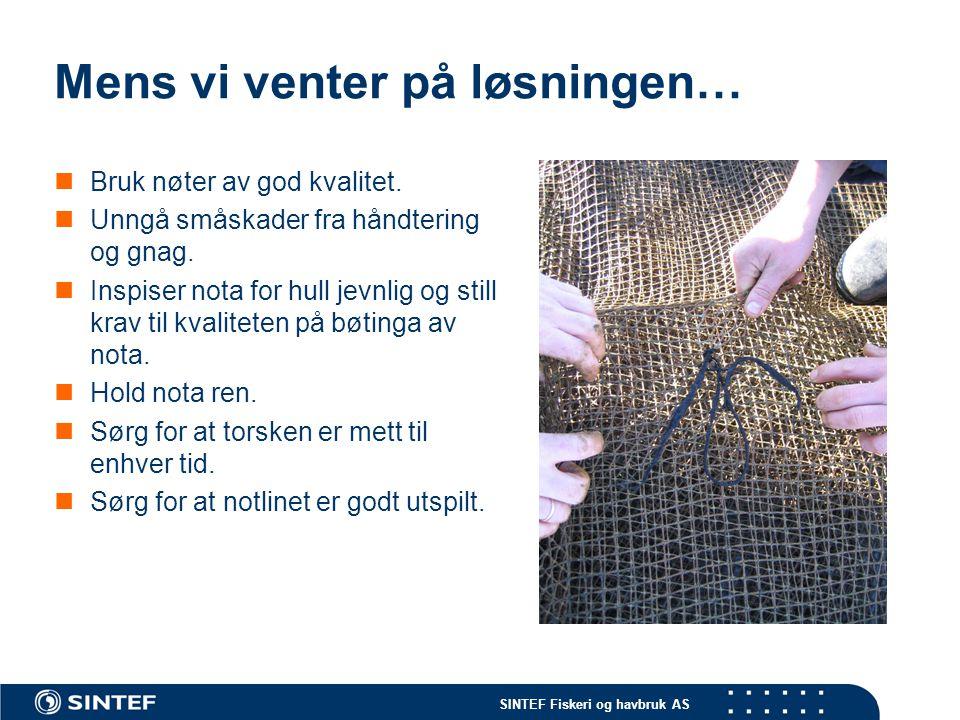 SINTEF Fiskeri og havbruk AS Mens vi venter på løsningen… Bruk nøter av god kvalitet.