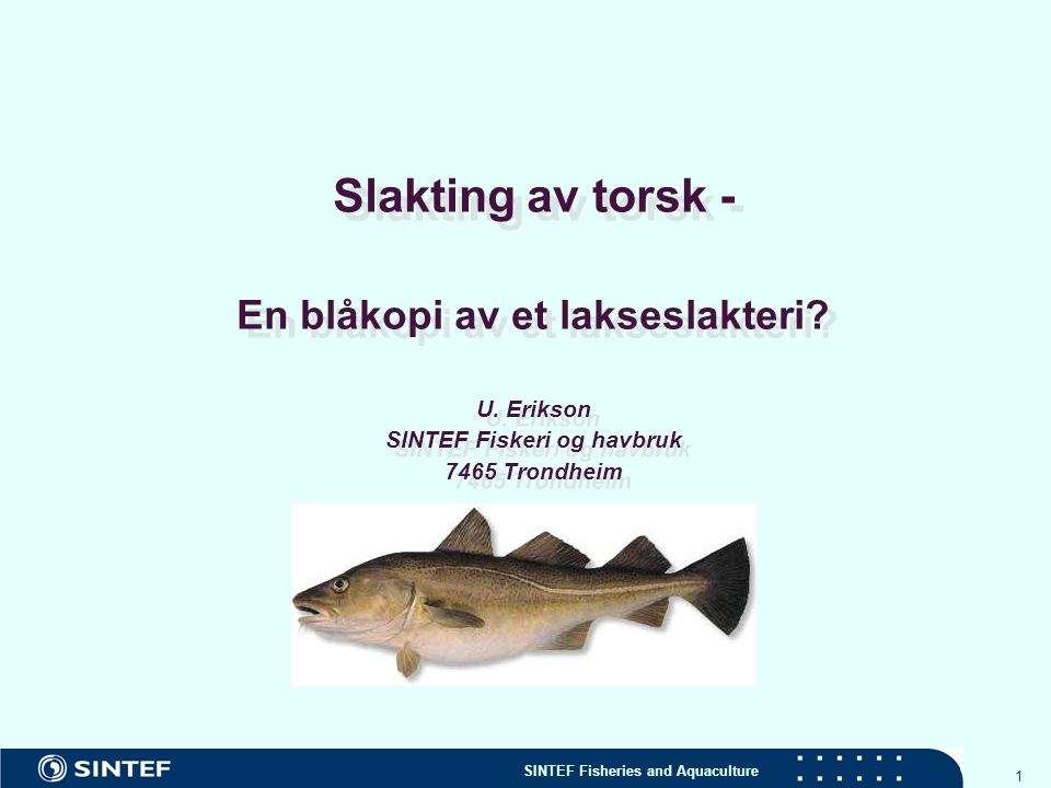 SINTEF Fisheries and Aquaculture 2 Fremtidens slaktelinje for torsk SINTEF gjennomfører prosjektet 'Etablering av en etisk, standardisert slaktelinje for oppdrettstorsk' (2005-2007) Kan dagens slaktelinje for laks benyttes med godt resultat.