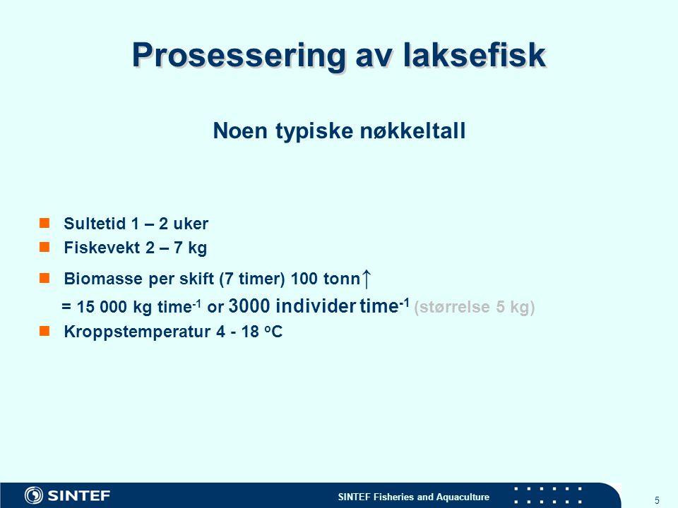 SINTEF Fisheries and Aquaculture 5 Prosessering av laksefisk Noen typiske nøkkeltall Sultetid 1 – 2 uker Fiskevekt 2 – 7 kg Biomasse per skift (7 time