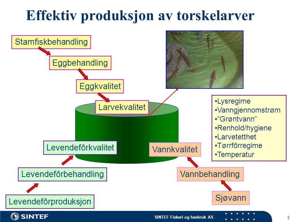 SINTEF Fiskeri og havbruk AS 5 Effektiv produksjon av torskelarver Stamfiskbehandling Eggbehandling Eggkvalitet Sjøvann Vannbehandling Larvekvalitet V