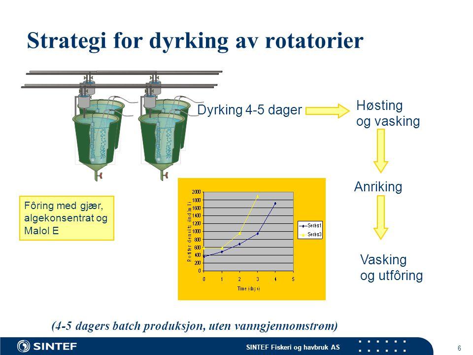 SINTEF Fiskeri og havbruk AS 6 Strategi for dyrking av rotatorier Dyrking 4-5 dager Høsting og vasking Anriking Vasking og utfôring (4-5 dagers batch