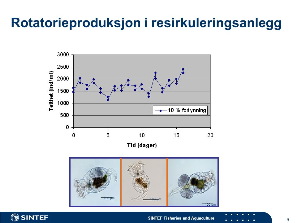 SINTEF Fisheries and Aquaculture 9 Rotatorieproduksjon i resirkuleringsanlegg 100 µm