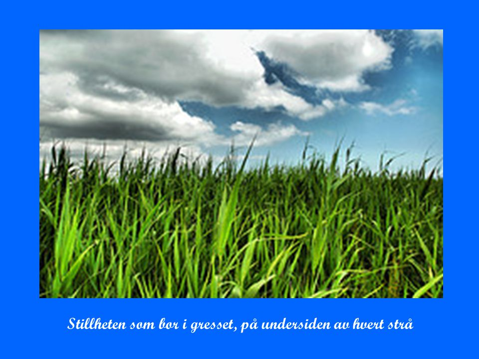 Stillheten som bor i gresset, på undersiden av hvert strå
