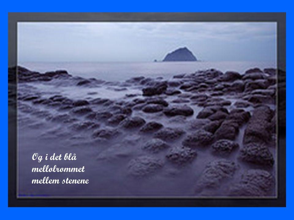 Og i det blå mellolrommet mellem stenene