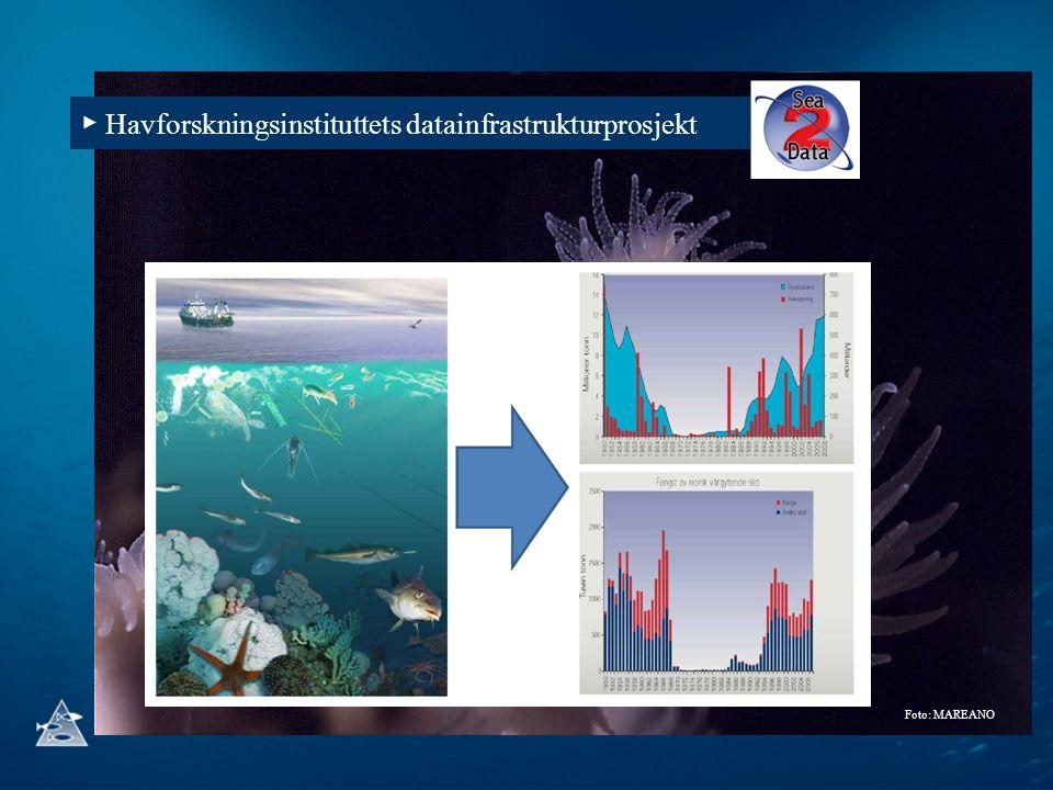 ▶ Havforskningsinstituttets datainfrastrukturprosjekt Foto: MAREANO