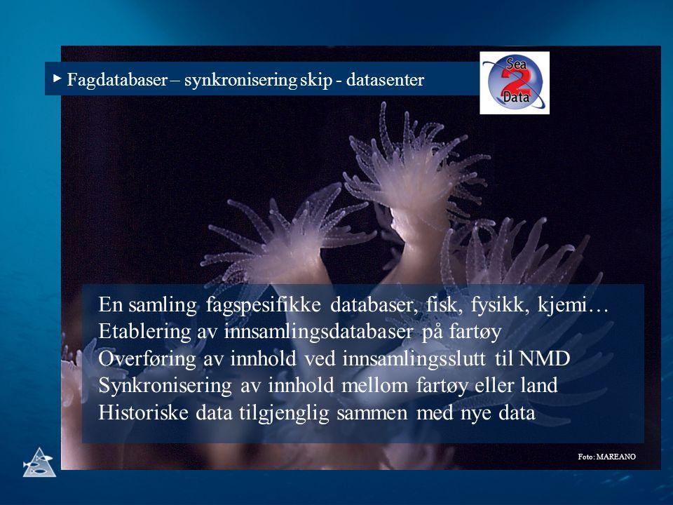 ▶ Fagdatabaser – synkronisering skip - datasenter Foto: MAREANO En samling fagspesifikke databaser, fisk, fysikk, kjemi… Etablering av innsamlingsdata