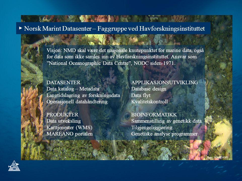 Foto: MAREANO ▶ Norsk Marint Datasenter – Faggruppe ved Havforskningsinstituttet Visjon: NMD skal være det nasjonale knutepunktet for marine data, ogs