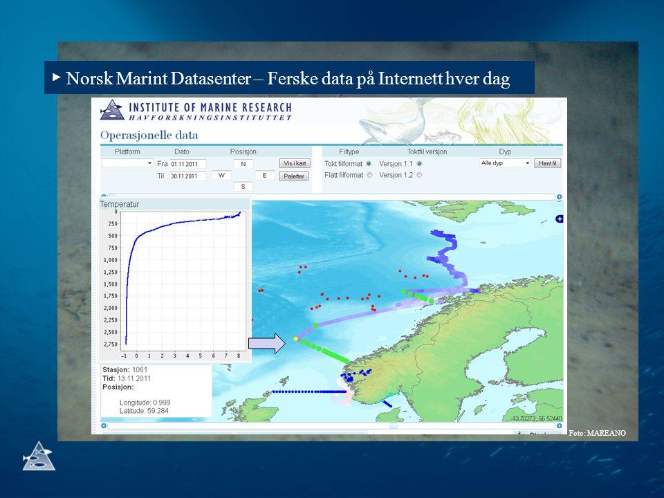 ▶ Norsk Marint Datasenter – Ferske data på Internett hver dag Foto: MAREANO