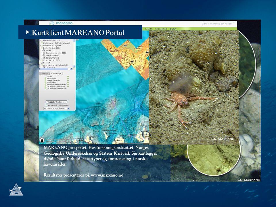 Foto: MAREANO MAREANO prosjektet, Havforskningsinstituttet, Norges Geologiske Undersøkelser og Statens Kartverk Sjø kartlegger dybde, bunnforhold, nat