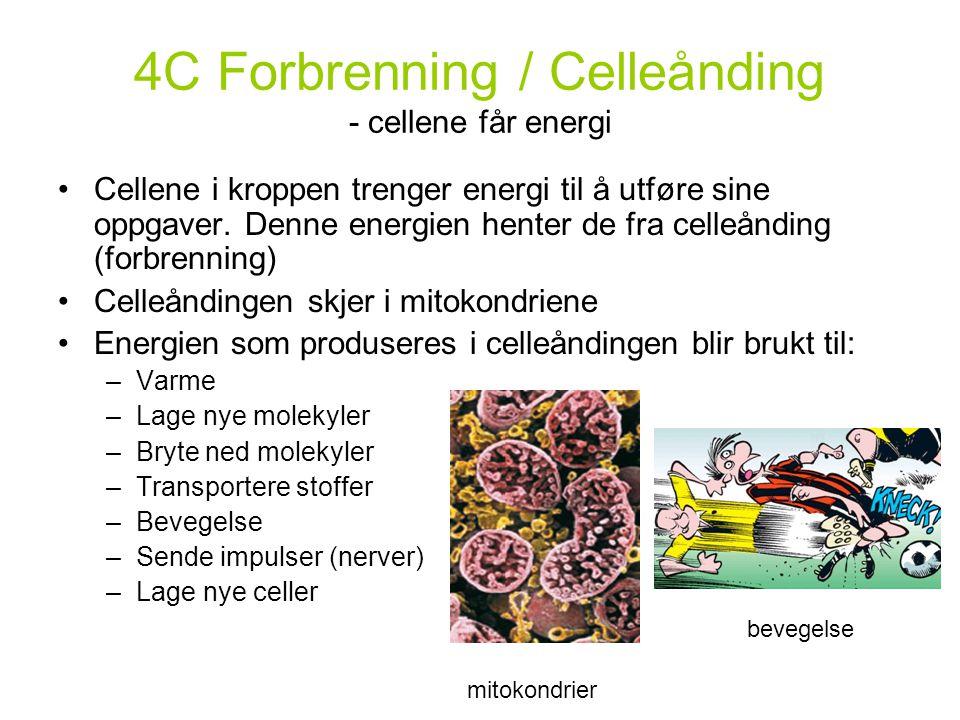 4C Forbrenning / Celleånding - cellene får energi Cellene i kroppen trenger energi til å utføre sine oppgaver. Denne energien henter de fra celleåndin